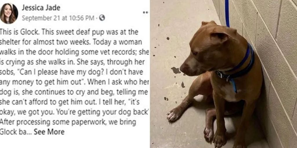 Florida Shelter Goes Viral After Waiving Fees To Reunite Deaf Dog With His Owner