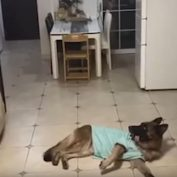 Smart Dog Receives Delivery Package When Home Alone
