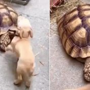 What Happens When A Perky Puppy Meets A Much Less Exuberant New Friend?