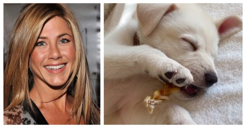 Jennifer Aniston Adopts Rescue Dog Saying: 'He Stole My Heart Immediately'