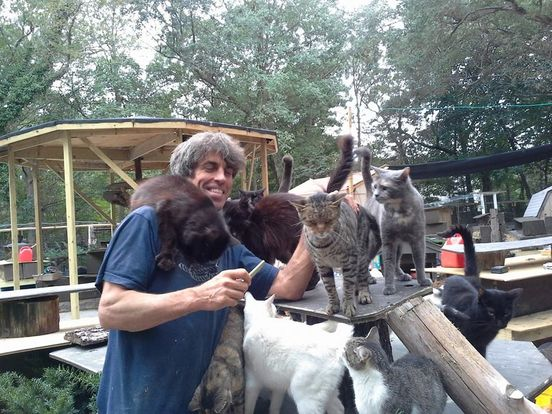 Man Rescues Over 300 Cats To Honor His Son That Died In A Motorcycle Accident