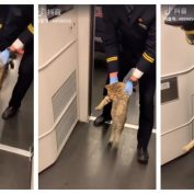Stowaway Cat Goes Viral After Getting Booted From Train, But Not Everyone's Amused