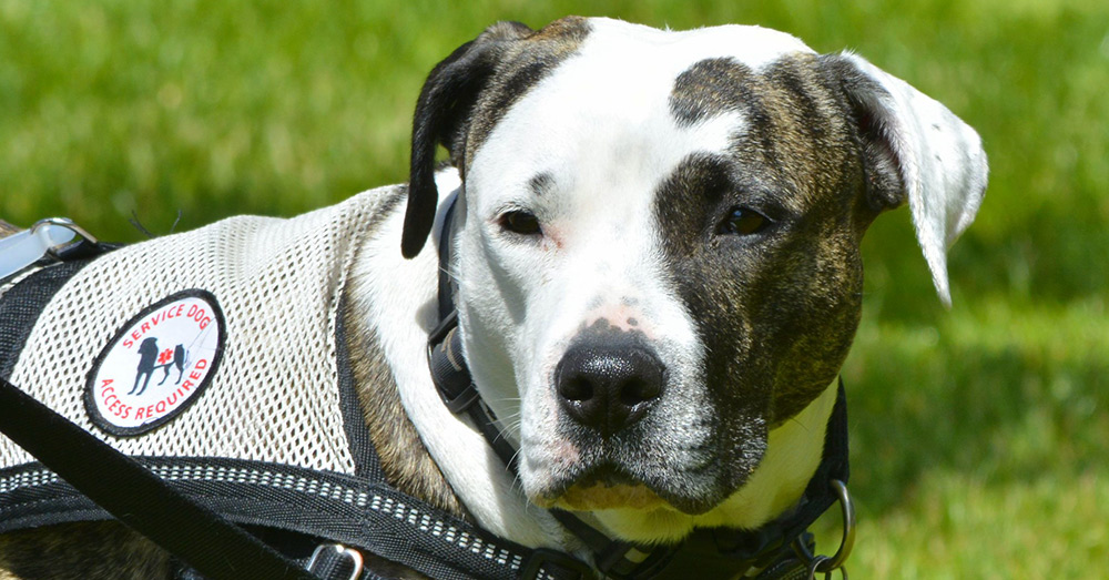 'He Alerted Me,' Navy Veteran Recalls How Loyal Service Dog Saved Her Life