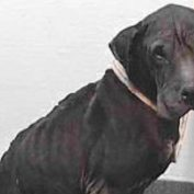 Beyond neglected and abused, 'Goose' is past due and needs help now