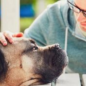 10 Ways to Help Someone Who Is Grieving the Loss of a Pet