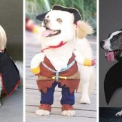 15 Awesome Dog Halloween Costumes You Can Get on Amazon