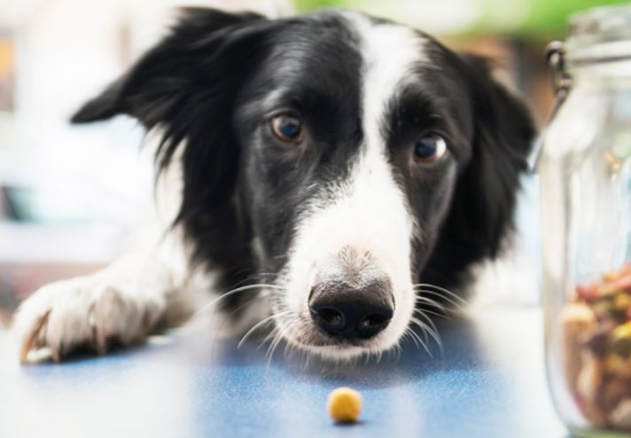 3 Essential Facts About Pet Health