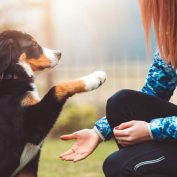 3 Pro Tips for Training Puppies You Need to Know