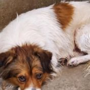 Young dog 'scared and nervous' after his owner surrendered him to shelter