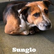 Unsure dog at risk of being put down at busy Texas animal shelter