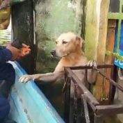 Mexican Navy Rescues Yellow Lab From Floodwaters After Finding Him Clinging To A Window