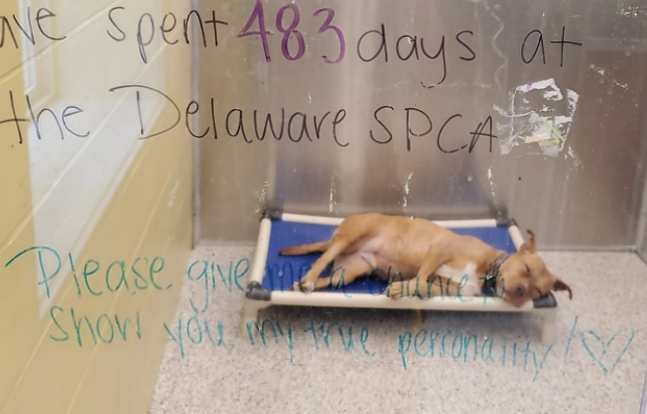 Rescue Dog Overlooked For Years Until Veteran Adopts Her After 866 Days In Shelter