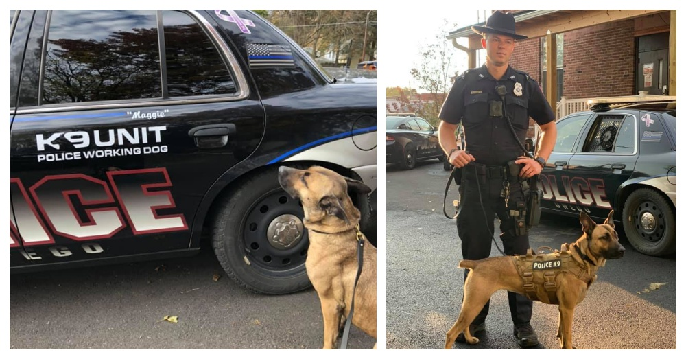 Shelter Dog Returned Twice Is Now K9 Officer In New York