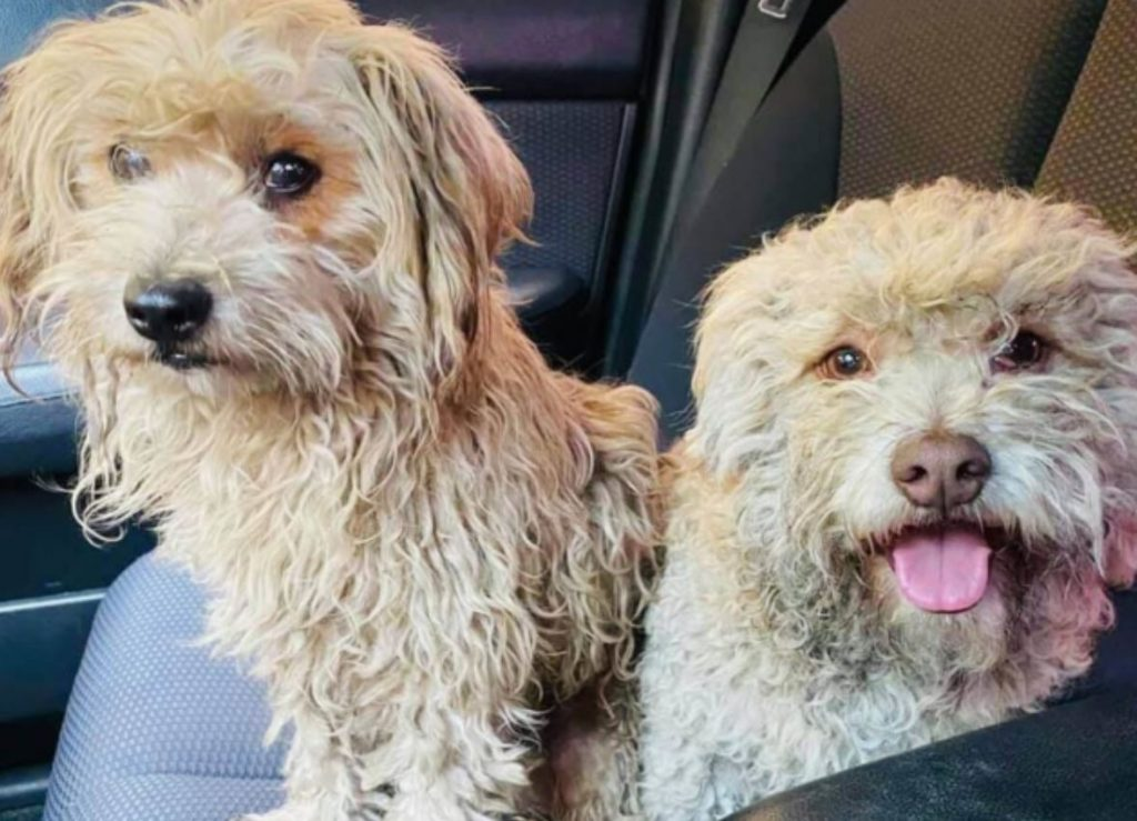 Adorable twosome found roaming the streets together
