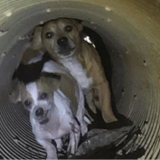After four hours of searching animal control officers rescued 11 abandoned dogs