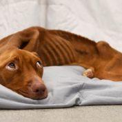Emaciated dog's worried eyes have broken social media hearts
