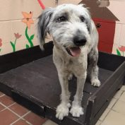 Poor pup returned to shelter after only one day