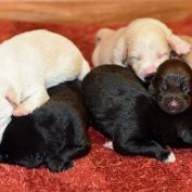 Newborn Puppies Dropped Off At Library Now Looking For Forever Homes