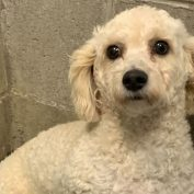 'Sweetest' dog surrendered to shelter over potty training issues