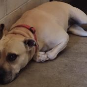 Dog has been at shelter for 6 years found running after her owners after being dumped