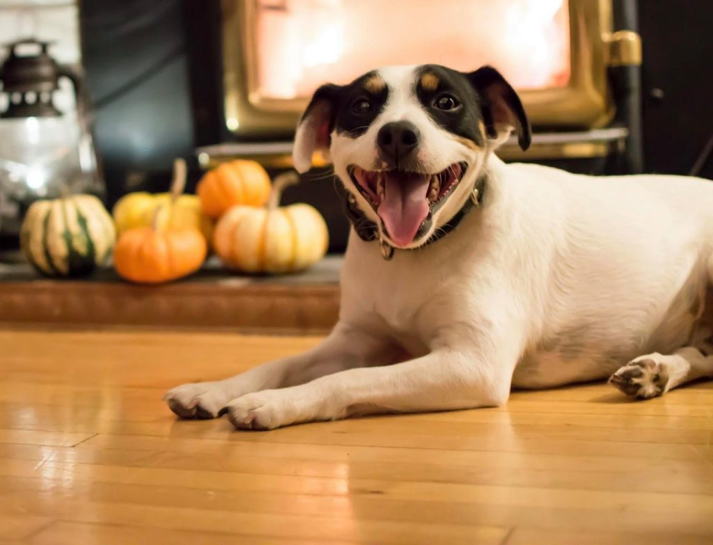 Shelters Offering Foster Pets And Free Food To Boost Morale During A Muted Thanksgiving