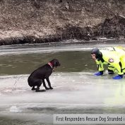 Firefighters Rush To Save Dog Stranded On Ice In The Middle Of A River
