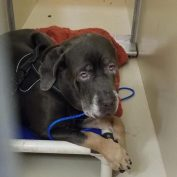 Heartbreaking! Surrendered dog too scared to move at animal control facility