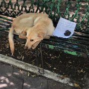 Dog Found Tied To A Bench With A Heartbreaking Letter