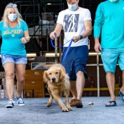 Rescue groups saves 20 golden retrievers from Chinese slaughterhouse