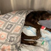 Help came too late for elderly dog abandoned on pile of trash