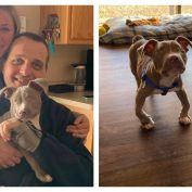 Blind Pit Bull Puppy Helps Grieving Ginger Cat And Family Heal After The Loss Of Beloved Dog