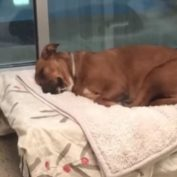 Pup's heart is broken: Fiona's bonded pal adopted and she is left alone at shelter
