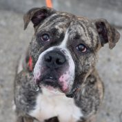 Gus is a good dog and doesn't want to die today at New York City shelter
