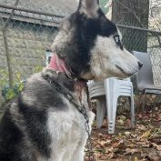 Couple Moves Out Of State And Leaves Their Dog Tied To A Fence