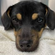 Puppy abandoned on side of road with broken femur and pelvis