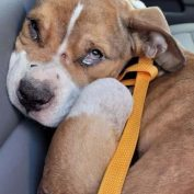 Six-month-old puppy severely neglected adopted by police officer who saved him