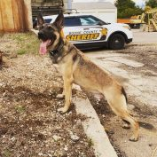 K-9 police dog killed after vehicle he was in was struck by a drunk driver