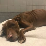 Urgent rescue underway for heartbreaking stray pup who has brought everyone to tears