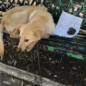 Puppy abandoned on park bench with a note calling him a 'sweetheart'