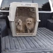 Bonded pair arrived at shelter in truck bed surrendered by owner moving away