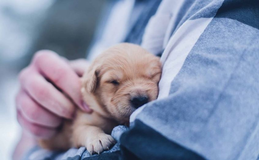 Is it Safe To Sedate Animals for Pet Relocation?