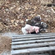 Heartbreaking discovery when truck driver saw 3 puppies dumped on side of road