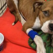 Abused Puppy Seized From New York Home Is Adopted By Responding Officer