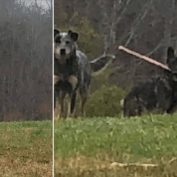 Mail carrier finds dog carrying an ax on his route
