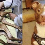 Starving Puppy Rescued During Frigid Day Blossoms Into Loving, Spoiled Dog