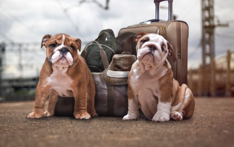 How Much Does Pet Shipping Cost: Your Complete Price Breakdown