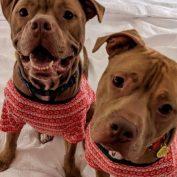 Bonded shelter dogs get dressed up in PJs for adorable sleepover