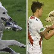 Stray Dog Interrupts Soccer Match And Ends Up Getting Adopted By A Player