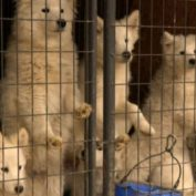 City In Alabama Makes Puppy Mills Illegal