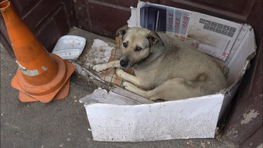 Dog Spent Her Whole Life On The Streets But Was Finally Adopted